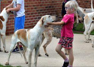 Dog Kennels Bicester